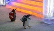 عکس | متفاوتترین بازدیدکنندگان تاریخ در جشنواره یخ و برف چین!