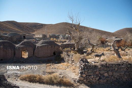یکی از روستاهای اطراف شهرستان سربیشه استان خراسان جنوبی که مخروبه شده و وجود حیوانات تنها نشانههای زندگی در آن است