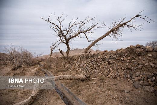 درختان سرسبزی که خشکسالی امان ایستادگیشان را بریده و سر بر خاک نهادهاند