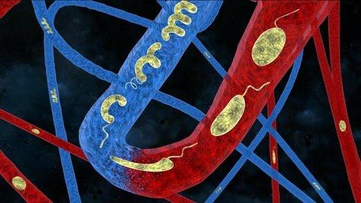میکرورباتهایی که با تغییر شکل از رگها عبور میکنند
