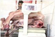 عکس |  کشف گوشت سگ در یکی از قصابیهای مشهد!