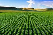 نگاهی به کشاورزی ایلام بعد از انقلاب؛ اراضی آبی ۸ برابر شد