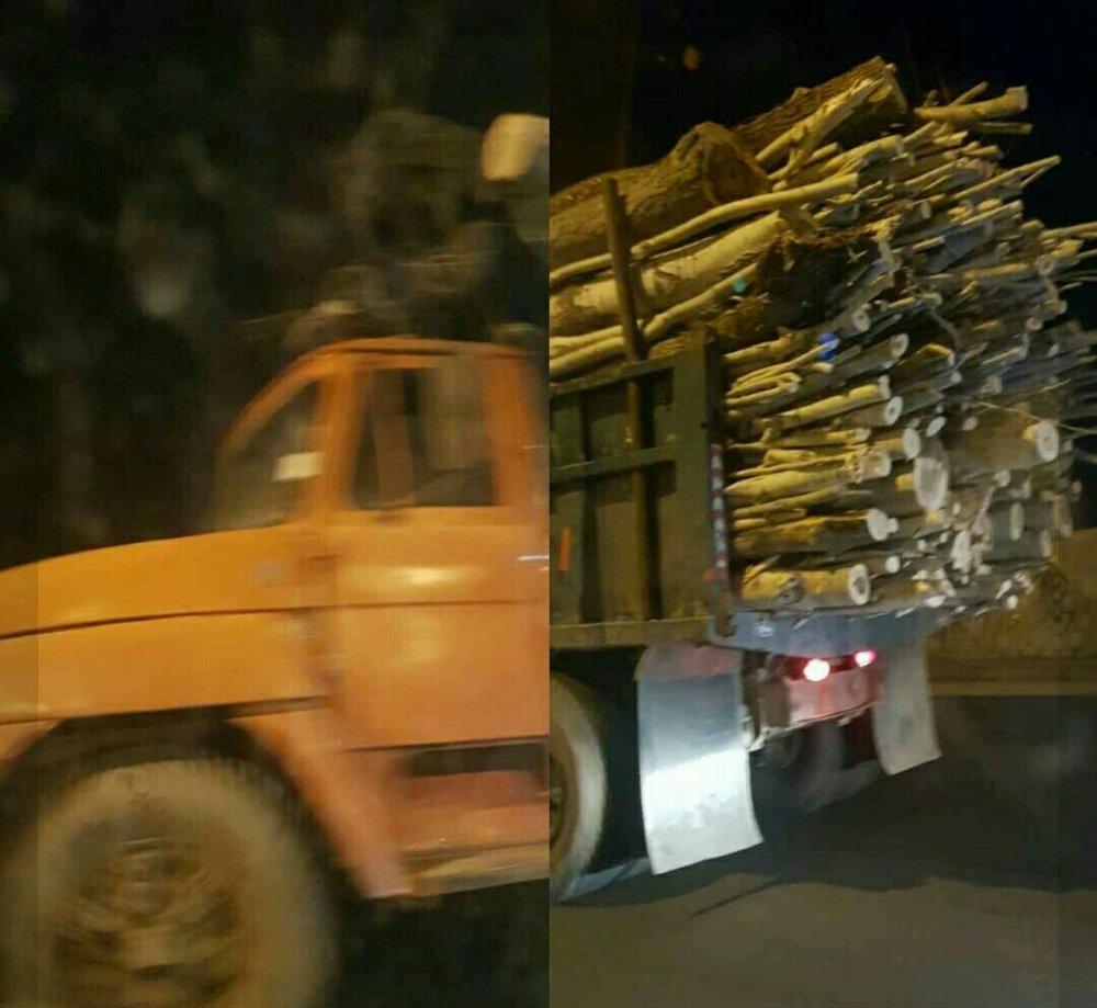 بریدن و انتقال چوب از خوی