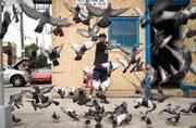 عکس | توییتی و کبوترهایش در عکس روز نشنال جئوگرافیک