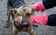 تصاویر | پناهگاه سگهای ولگرد در اهواز
