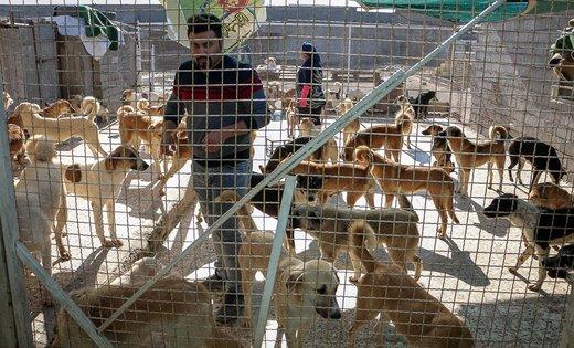 سگگردانی جرم است؟ نگاهی به قوانین ایران و جهان