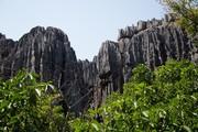 فیلم | جنگل عجیبی که از سنگ ساخته شده