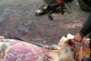 فیلم | قصابی چندین راس الاغ در اصفهان (۱۴+)