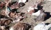 کشف لاشه الاغ ذبح شده و آماده عرضه به بازار در تبریز