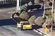 فیلم | لحظه تیراندازی راننده تاکسی با ژ۳ به شهرداری هشتگرد!