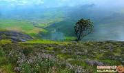 این منطقه از آسیا، زادگاه گلی افسانهای و نادر است! +تصاویر