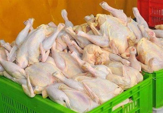 صادرات مرغ ممنوع شد
