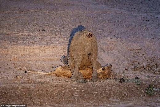 حیات وحش زامبیا