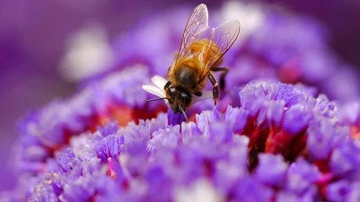 زنبورها ریاضیدانان خوبی هستند