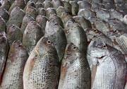 نرخ انواع مختلف ماهی در میادین میوه و تره بار تهران