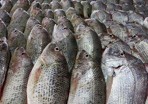 ماهی گران میشود؟