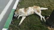 سگکشی اینبار در خوی / شهرداری: بر طبق دستور وزارت کشور عمل میکنیم و کشتار را تکذیب میکنیم