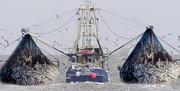 مافیای صیادی کشتیهای چینی در آبهای جنوب حقیقت دارد؟