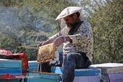تصاویر | پایتخت عسل ایران در زمستان
