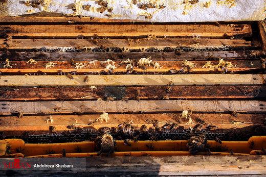 پرورش عسل در هرمزگان