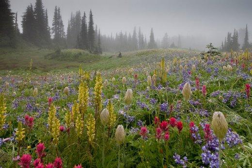 پارک ملی کوه رینیر  ایالت واشینگتن آمریکا