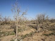 تهدید۹۰ درصد جمعیت استان چهارمحال وبختیاری با خشکسالی