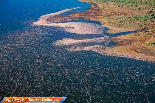 فلامینگوها در دریاچه ناکورو
