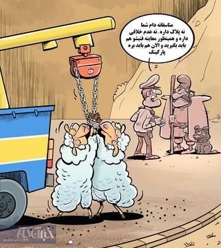 گوسفندهای بدون پلاک به پارکینگ منتقل شدند!