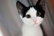 فیلم | عملیات پیچیده برای نجات گربه بازیگوش