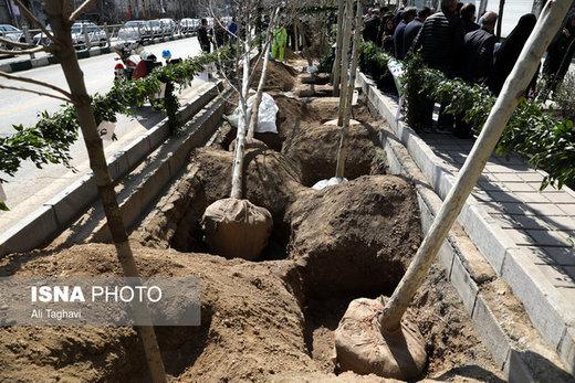 چنارها به خیابان ولیعصر بازمیگردند/ کاشت ۱۱۰۰ نهال جدید