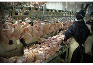 واکنش دامپزشکی درباره فروش مرغ مُرده در بازار