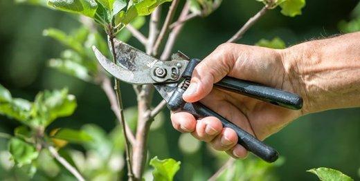 ۱۱۰۰ اصله درخت چنار در خیابان ولیعصر (عج) کاشته شد