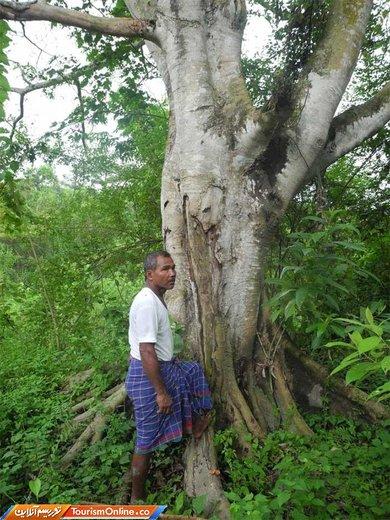 «جاداو پاینگ» -اهل هند- از 40 سال پیش در یک منطقه درختکاری کرد و امروزه جنگلی بزرگتر از سنترال پارک ایجاد کرده است