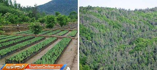 در پاکستان یک میلیارد درخت کاشته شده و قرار است تا 5 سال آینده به 10 میلیارد برسد