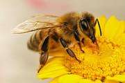 فیلم | ۵ توانایی شگفتانگیز زنبور عسل