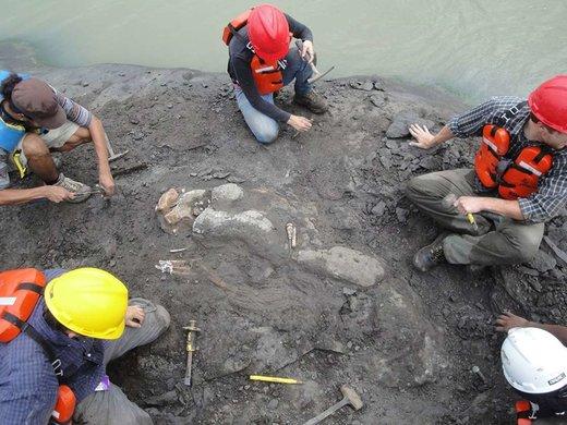 کشف بقایای گاو دریایی ۲۰ میلیون ساله در پاناما