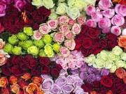 گل در آستانه روز مادر ۵۰ درصد گران شد
