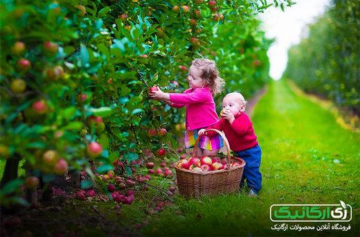 بهترین مرجع مطمئن شناسایی و خرید محصولات ارگانیک کجاست؟