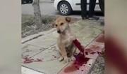 فیلم | کمکرسانی پلیس و مردم به سگی که کتک خورده بود