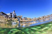 تصاویر | برندگان مسابقه عکاسی زیر آب سال ۲۰۱۹