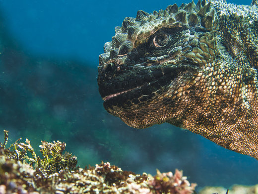 گودزیلایی زیر آب! این عکس در مجمعالجزایر گالاپاگوس گرفته شده است