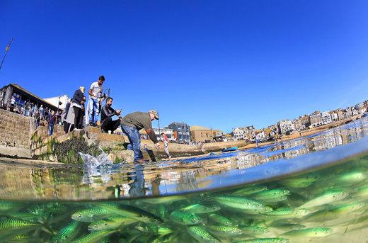 ماهی خالخالی Tide در آبهانی بریتانیا