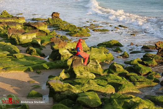 سبزی بهار در ساحل پارسیان