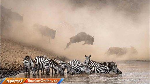 عکس برنده از: (KETAN KHAMBHATTA)