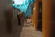 فیلم | واکنش دیدنی یک سگ به پلیسی که نجاتش داد