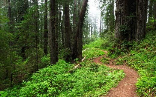 سرانه هر ایرانی از جنگل، کمتر از دو دهم هکتار