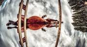 عکس | پرش اسب در عکس روز نشنال جئوگرافیک