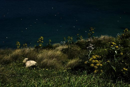 گیاهان رازیانه در خلیج  Gnejna خارج از روستای Mgarr مالت
