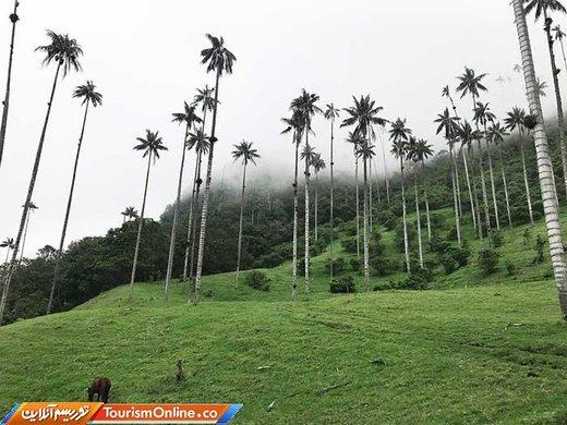 دره کوکورا کلمبیا
