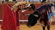آیا گاوهای وحشی و دختران خواننده «بن سلمان» را نجات میدهند؟!